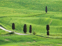 Typische Toskana-Landschaft Stockbilder