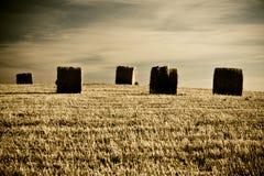 Typische toskanische Landschaft stockfoto