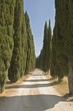 Typische Tuscon-Landschaft stockbild