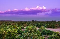 Typische wijngaard in Spanje royalty-vrije stock foto