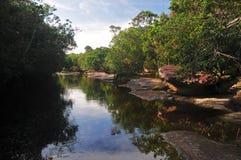Typischer Amazonas-Nebenfluss Stockbild