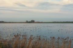 Typischer flacher niederländischer Polder mit seinen Abzugsgräben und Seen Stockbild