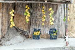 Typischer Stand von großen Zitronen für Verkauf auf der Amalfi-Küste, Kampanien, Italien stockbild