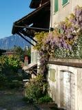 Typisches Schweizer Haus mit purpurroter Blume auf dem Balkon lizenzfreie stockfotografie