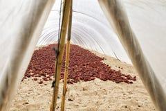 Typisches spanisches nyora Landwirtschaft unter Plastikabdeckung Stockbilder