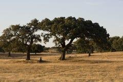 typisk alentejo fält Fotografering för Bildbyråer