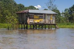 Typisk amasonhem (Amazonia) Arkivbild