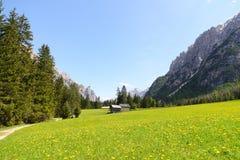 Typisk bergliggande med maskrosblommor Royaltyfria Bilder