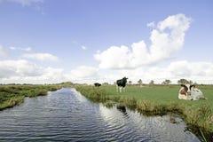 Typisk brett holländskt landskap Royaltyfria Bilder