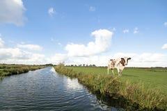 Typisk brett holländskt landskap Royaltyfri Bild