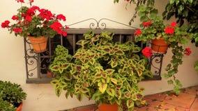 Typisk fönster med växter-Benalmadena Arkivfoto
