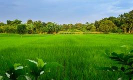 Typisk idylliskt landskap av en by av Bengal, kopieringsutrymme Arkivfoton