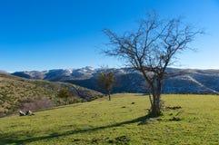 Typisk landskap av den Gran Sasso nationalparken, Abruzzo, Italien Arkivfoto
