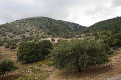 Typisk landskap på ön av Kreta royaltyfria bilder