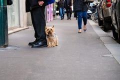 Typisk parisian plats av hunden som stairing på kameran bredvid man med den svarta dräkten och svarta skor, vars ben visar Arkivbilder