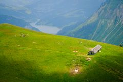 Typisk sommarbergSchweiz landskap royaltyfri bild