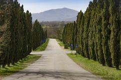Typisk träd-fodrad aveny med cypressträd i Tuscany royaltyfri fotografi