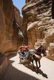 typisk turist- transport för petra Royaltyfria Foton