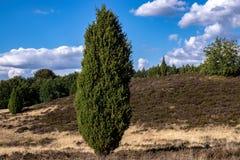 Typisk tyskt hedlandskap i naturreserven Lüneburger Heide royaltyfri bild