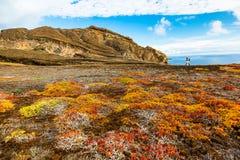 Typisk vegetation av övredelen av Punta Pitt royaltyfria foton