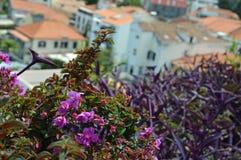 Typiska byggnader av Funchal fotografering för bildbyråer