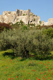 Typiska landskap av Les-Baux-de-Provence royaltyfri foto