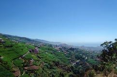 Typiska terrasserade lantliga förorter av den Camara de Lobos kuststaden Royaltyfria Bilder