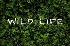 Typograf plakat Dziki życie na koniczynowym trawy tle, odgórny widok obraz royalty free