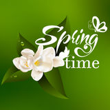 Typographic Design. Lettering Spring design with Stock Photo