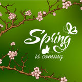Typographic Design. Lettering Spring design with Royalty Free Stock Images