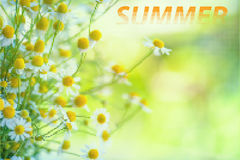 Typographic Design Summer Royalty Free Stock Images