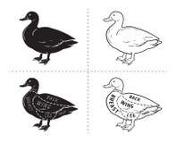 Typographic duck butcher cuts diagram scheme. vector illustration