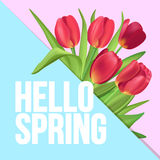 Typographic poster design with realistic tulips bouquet. Hello S. Hello Spring typographic modern poster Stock Photo