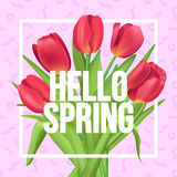 Typographic poster with red tulips bouquet. Hello, Spring!. Typographic poster design with flowers Stock Photography