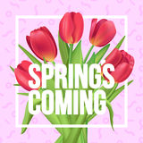 Typographic poster with red tulips bouquet. Spring is coming!. Typographic poster design with flowers Royalty Free Stock Photography