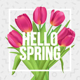 Typographic spring poster with tulips bouquet. Hello Spring!. Typographic spring poster with tulips Stock Images