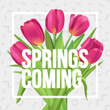 Typographic spring poster with tulips bouquet. Spring`s coming!. Typographic spring poster with tulips Royalty Free Stock Images