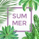 Typographie d'été avec les feuilles et le cadre exotiques Photo libre de droits