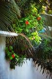 Typowa biała prosta wiejska domu ogrodzenia architektura z tropikalnymi kwiatami i roślinami Maldives wioska Obraz Stock