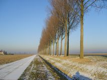 Typowa Holenderska zima w wiejskim gubernialnym Flevoland fotografia royalty free