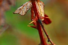 Typowa roślina łatwa dostępność w Śródziemnomorskiej plamie Włoski półwysep Obraz Royalty Free