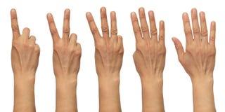 Typowa Turecka kobiety ręka Obraz Stock