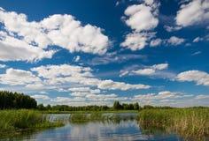 Typowego lata jeziorna scena, Białoruś Lato krajobraz z lasowym jeziorem i błękitnym chmurnym niebem Lato krajobraz z jeziorem, p Fotografia Stock