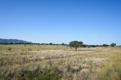 Typowo afrykanina krajobraz od pobocza Obraz Royalty Free