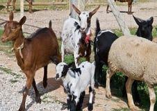 Typowy kózki gospodarstwo rolne w Portugalia z caklem i kózkami zdjęcia stock