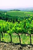typowy krajobrazowy Tuscan Zdjęcie Stock