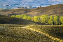 typowy krajobrazowy Tuscany Zdjęcie Stock