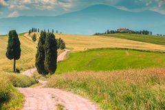 Typowy Tuscany krajobraz z wyginającą się drogą cyprysem i, Włochy, Europa zdjęcie royalty free