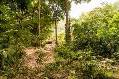 Typowy widok w Tayrona parku narodowym Kolumbia obrazy stock