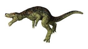 Tyrannosarie Rex på vit Arkivbilder